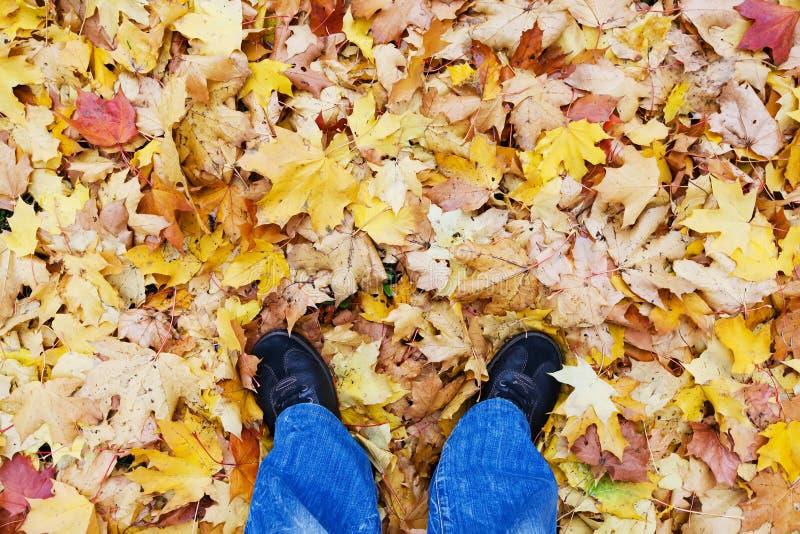 Jesień czasu życia przełaz Odgórny widok mężczyzna nogi, niebiescy dżinsy i czarni sneakers, rzemienni buty Susi jesień liście kl zdjęcie stock