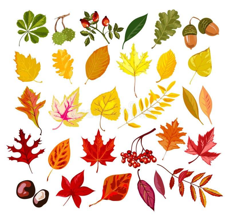 Jesień dąb, klon, rowan liścia ulistnienia spadku inkasowy wektor odizolowywający liście ustawiający ilustracji
