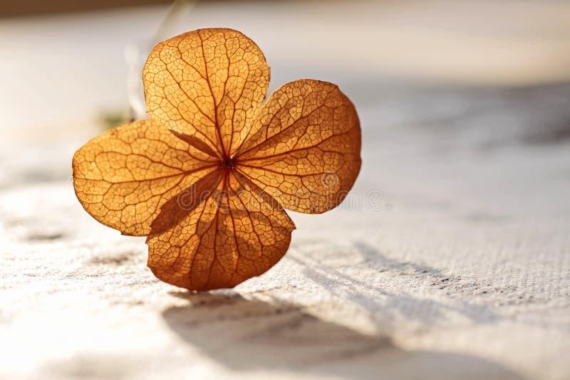 jesień dekoracja zdjęcie royalty free