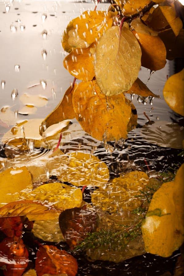 jesień deszcz obrazy stock