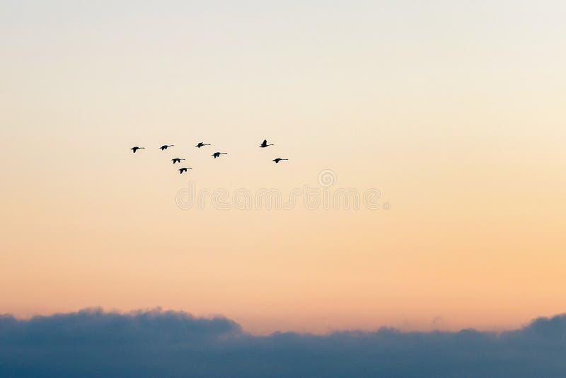 Jesień dnia piękni ptaki migrujący latają daleko od fotografia stock