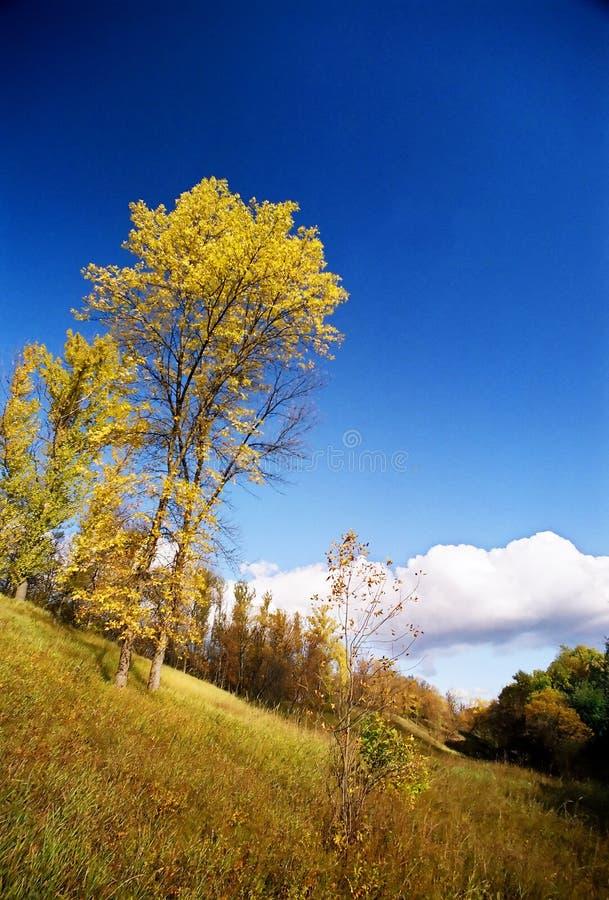 jesień drzewa fotografia stock