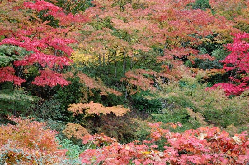 Jesień drzewa zdjęcia stock