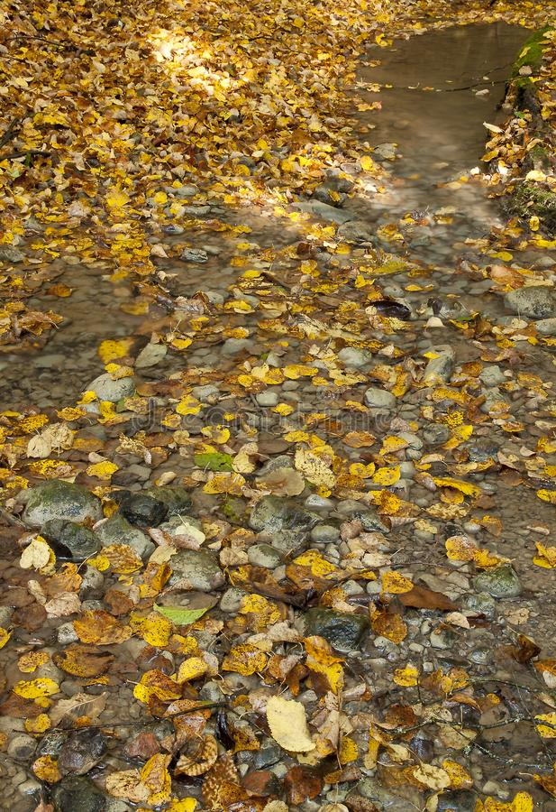 Jesień dywan obrazy royalty free