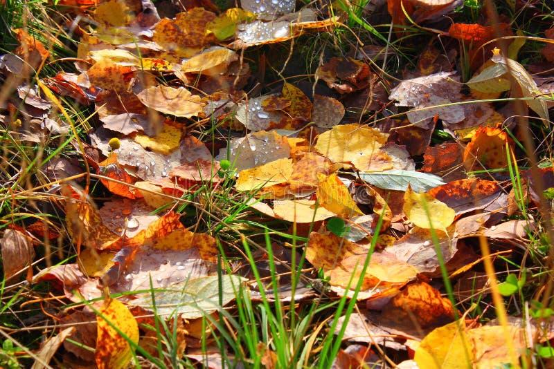 Jesień dywan obrazy stock
