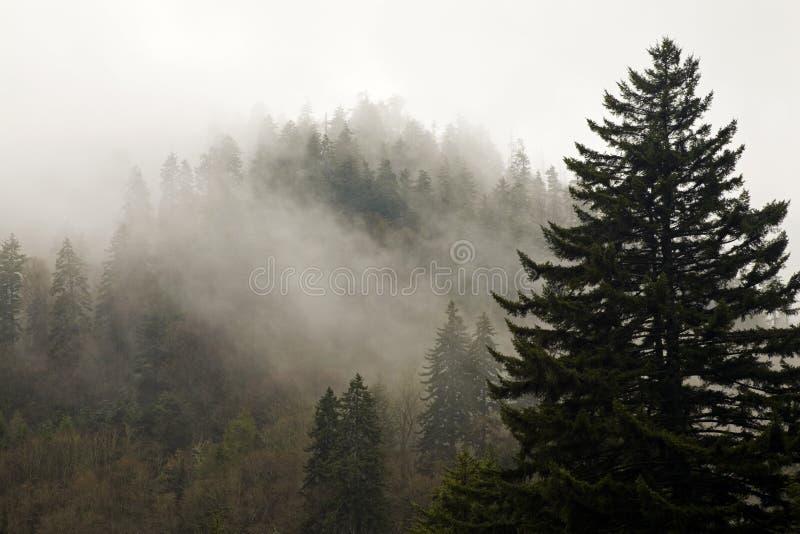 jesień evergreens wielkie góry dymiące obraz stock