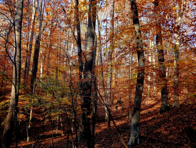 Jesień forrest w Virginia kolorowym krajobrazie zdjęcie royalty free
