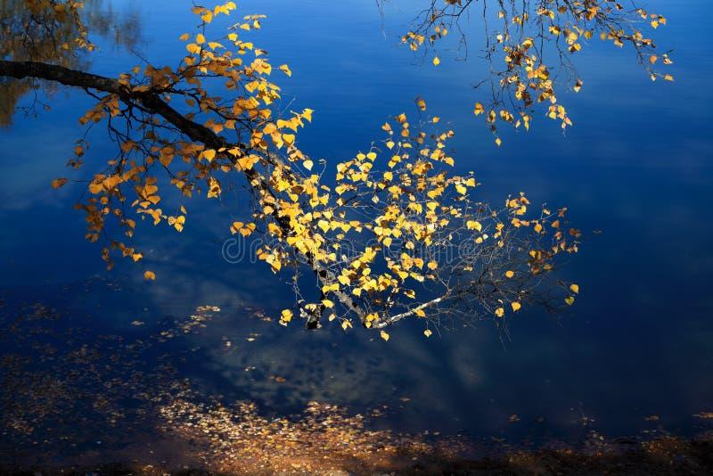 jesień gałąź obraz stock