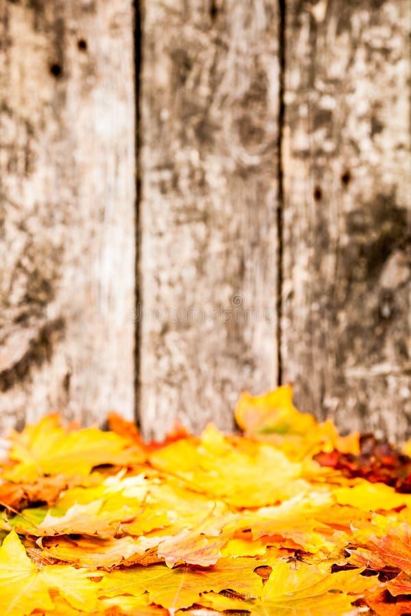jesień granica zdjęcia royalty free