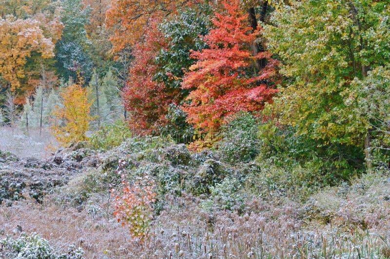 jesień gromadzący się bagna śnieg obraz stock
