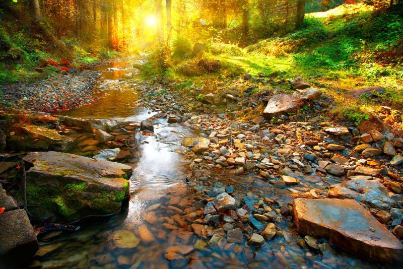 Jesień Halna wiosna, lasu krajobraz fotografia stock