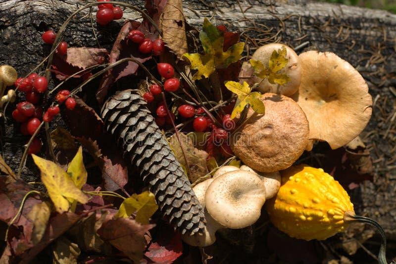 Jesień i kolory sezon zdjęcie royalty free