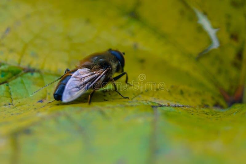 Jesień insekta obsiadanie na żółtym prześcieradle zdjęcia royalty free