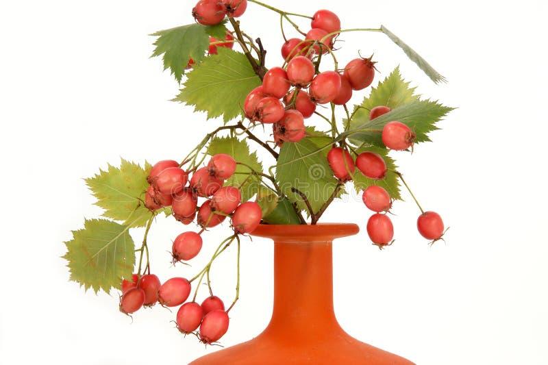 jesień jagod bukieta głóg zdjęcia stock