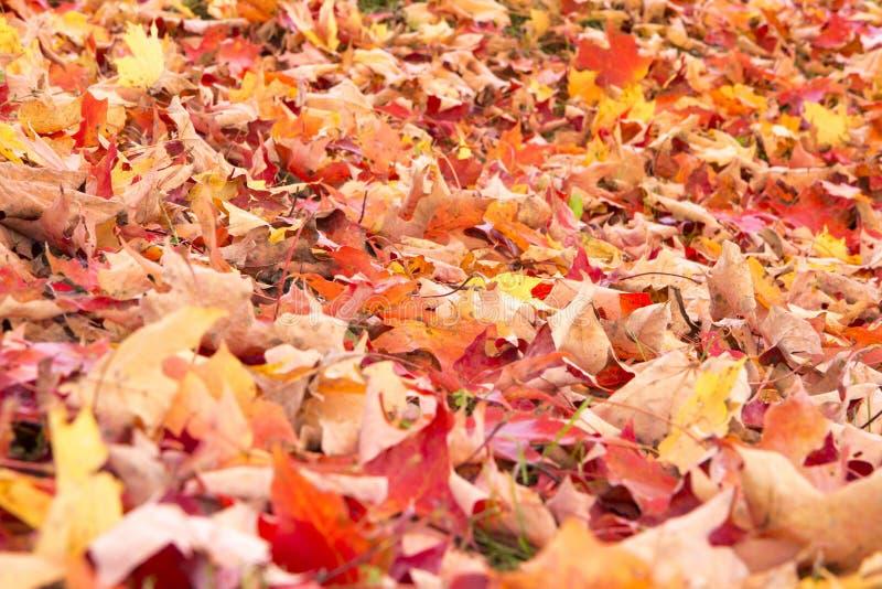 Jesień jaskrawy Liść obrazy stock