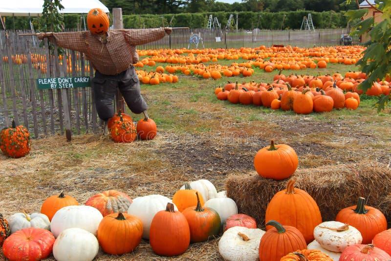 jesień jasnego świtu śmieszny ogrodowy kuchni krajobraz ochrania bani dojrzałego wiejskiego strach na wróble niebo obrazy royalty free