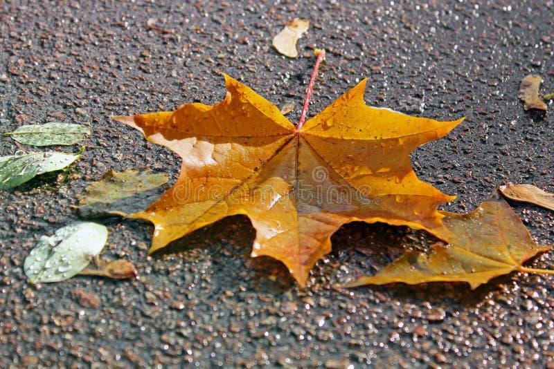 Jesień jesienią ilustracji tła komputerowych liście zdjęcia stock