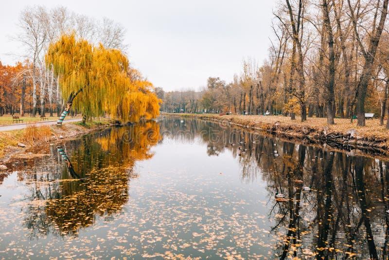 Jesień jezioro Żółty ulistnienie w jesieni obraz royalty free