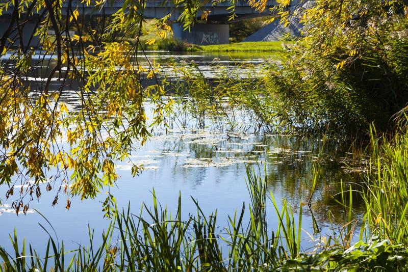 Jesień jezioro na słonecznym dniu obrazy royalty free