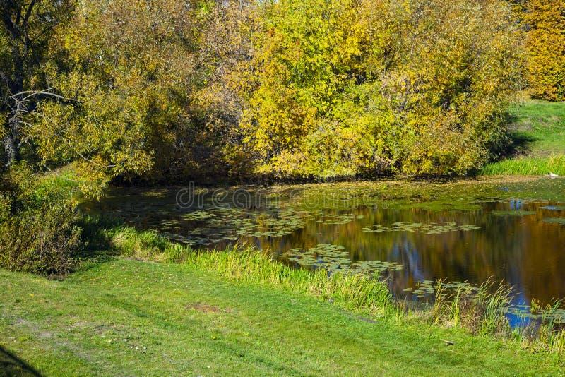 Jesień jezioro na słonecznym dniu zdjęcie stock
