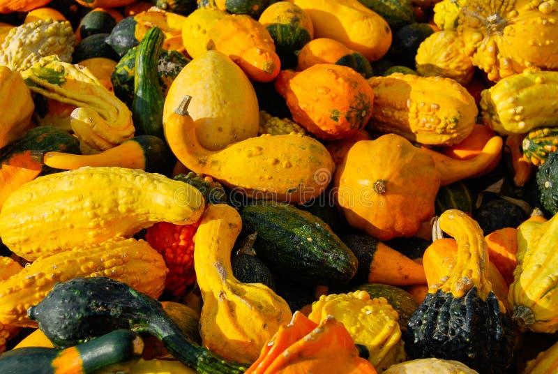 Jesień kabaczka asortyment w rolnika Targowym koszu zdjęcie royalty free