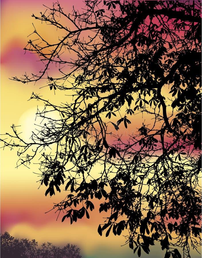 Download Jesień kasztanu gałąź ilustracja wektor. Ilustracja złożonej z chmurny - 38556911