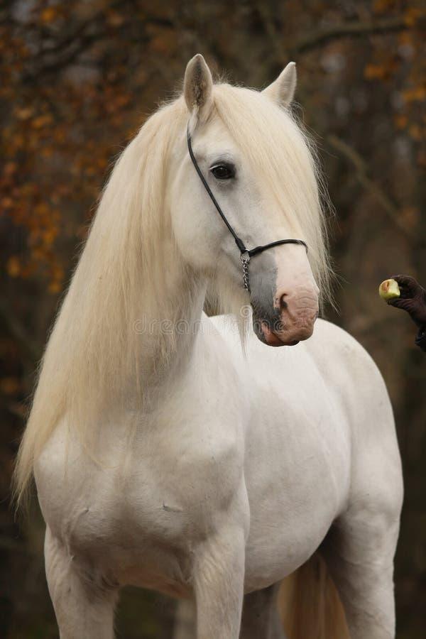 jesień koński poncza biel zdjęcia royalty free