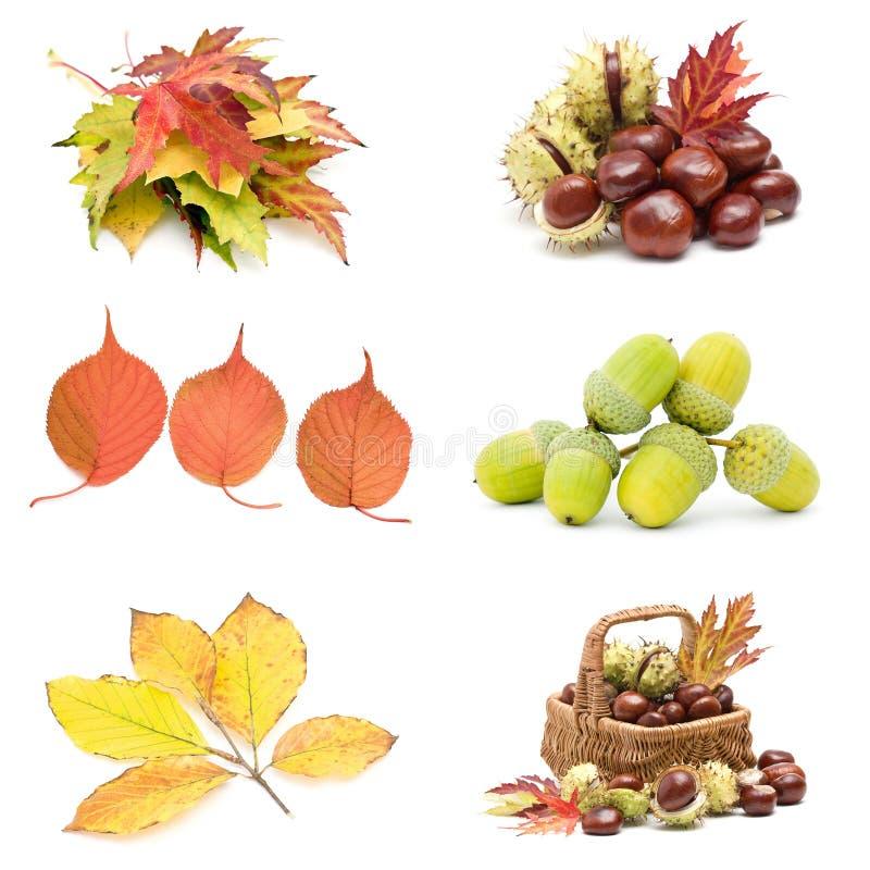 jesień kolaż obraz royalty free