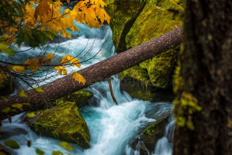 Jesień kolorów Oregon krajobrazu Toketee spadków Douglas okręg administracyjny Oreg obrazy stock