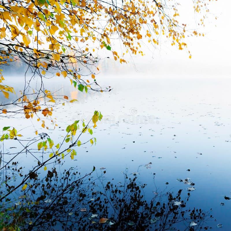 Jesień kolor żółty opuszczać z odbiciem na spokojny jeziorze fotografia royalty free