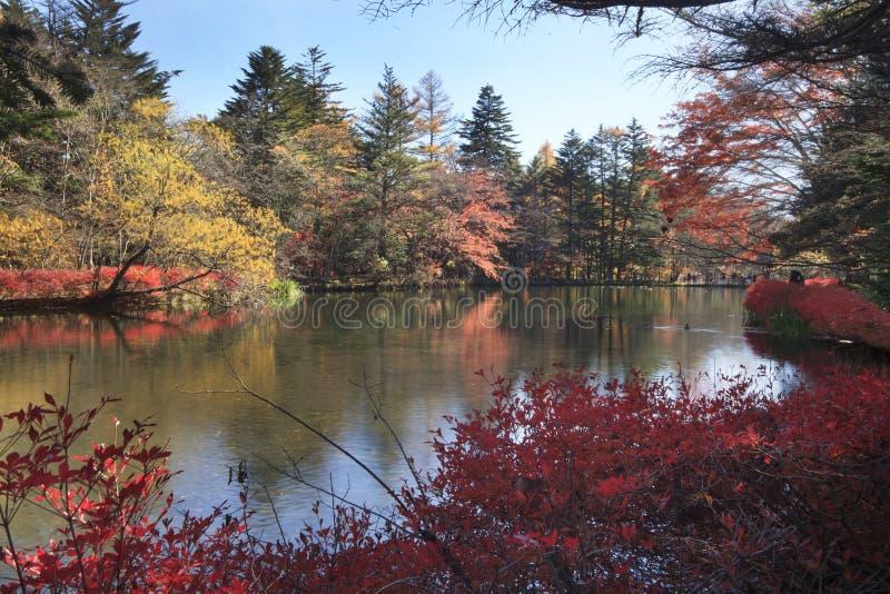 Jesień kolor staw, Karuizawa, Nagano, Japonia zdjęcia stock