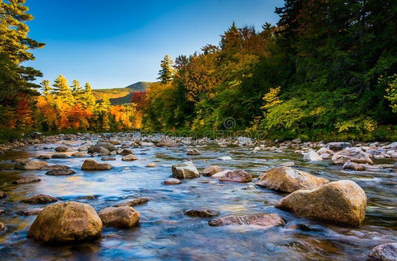 Jesień kolor wzdłuż Błyskawicznej rzeki wzdłuż Kancamagus autostrady, obraz royalty free