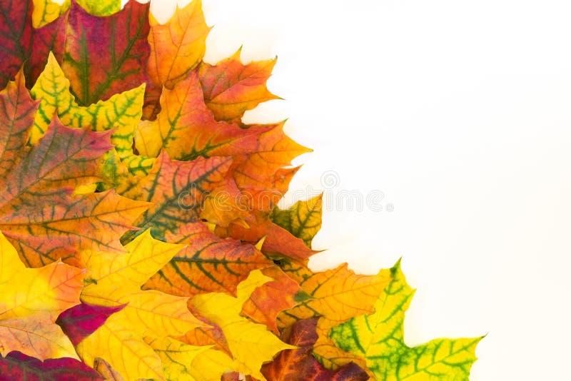 Jesień kolorowi liście jak granicę z biel przestrzenią dla teksta Odgórny widok Spadek rama obraz stock