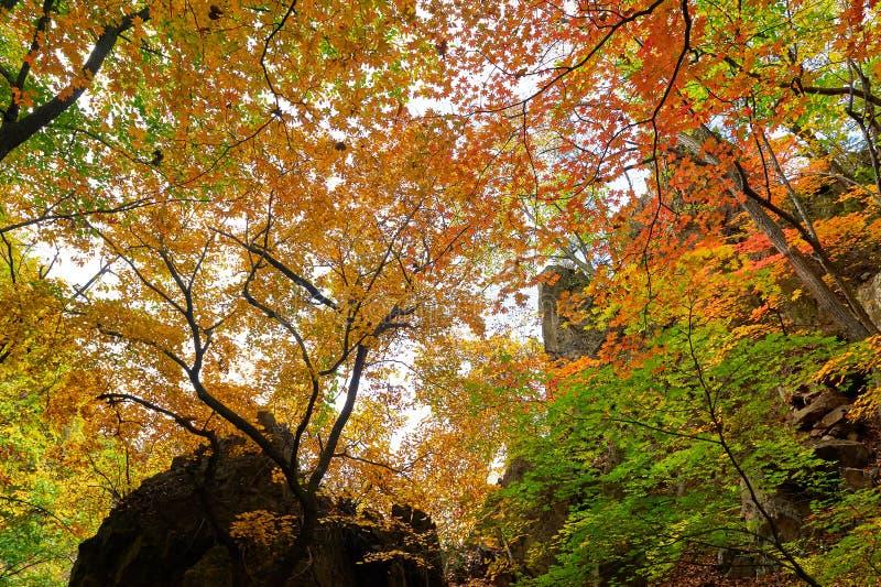 Jesień kolorowi liście klonowi zdjęcia royalty free