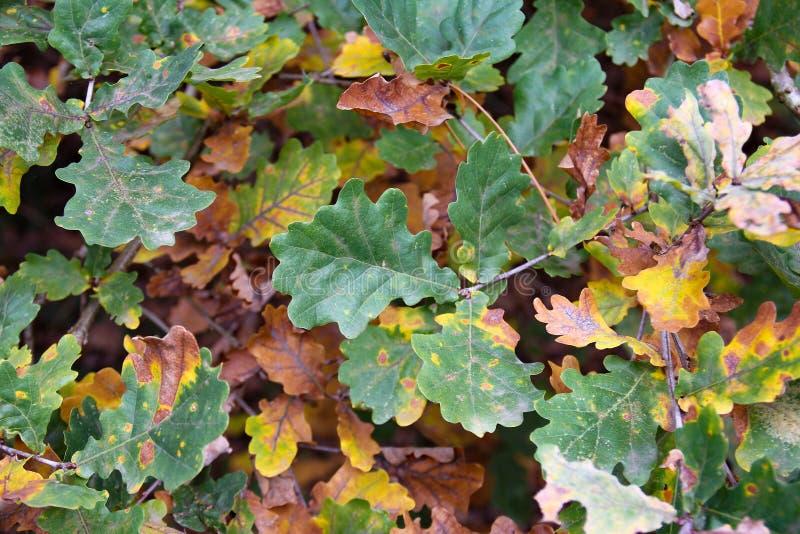 Jesień Kolorowi liście przy ogródem botanicznym obraz stock