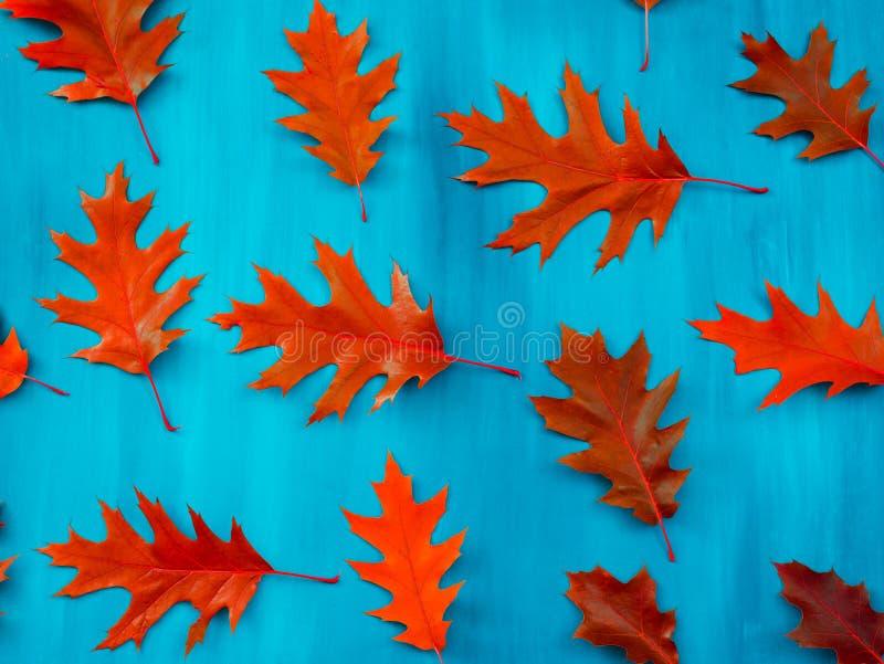 Jesień kolorowy dębowy liść tło zdjęcie royalty free
