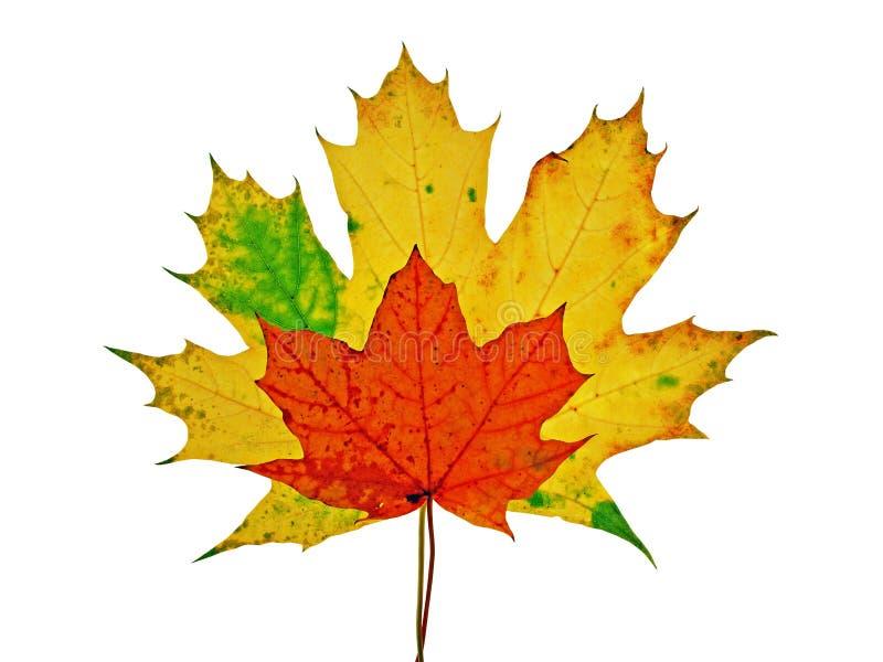 Jesień Kolorowy Liść Klon żywy Zdjęcie Stock - Obraz złożonej z liść, kolorowy: 10845228
