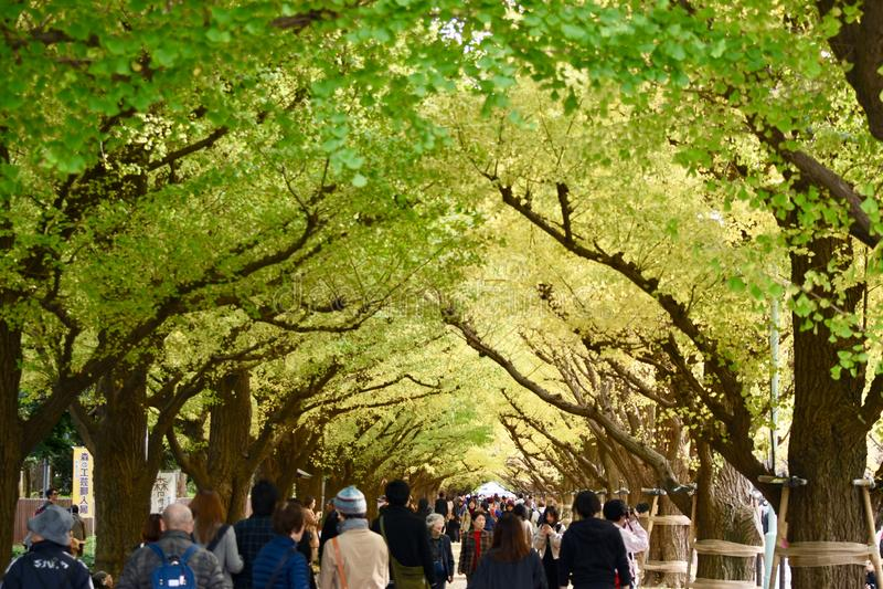 Jesień koloru drzewo zaludnia chodzącego Tokio zdjęcia royalty free