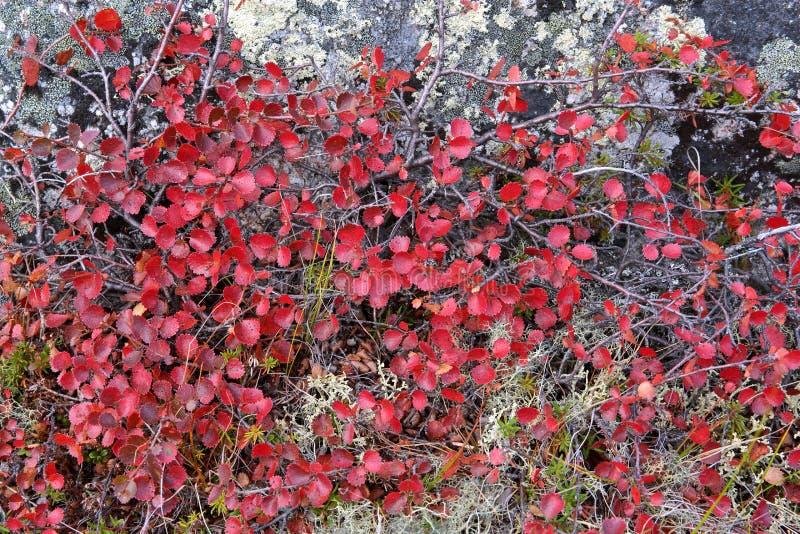 Jesień koloru paleta w tundra zdjęcie royalty free