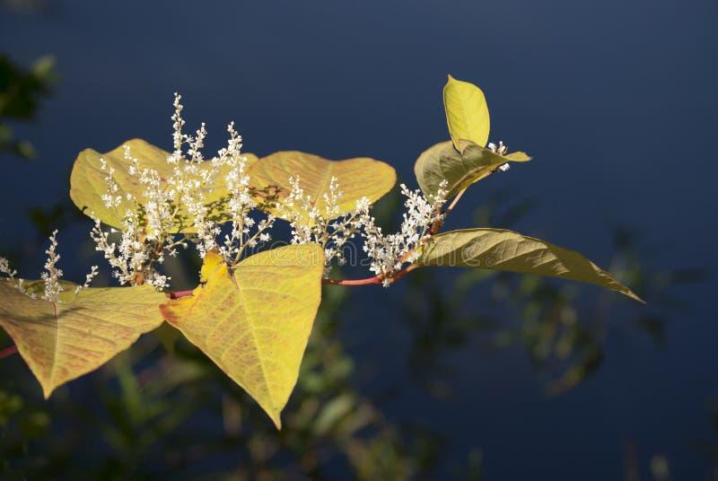 Jesień kolory zdjęcie royalty free