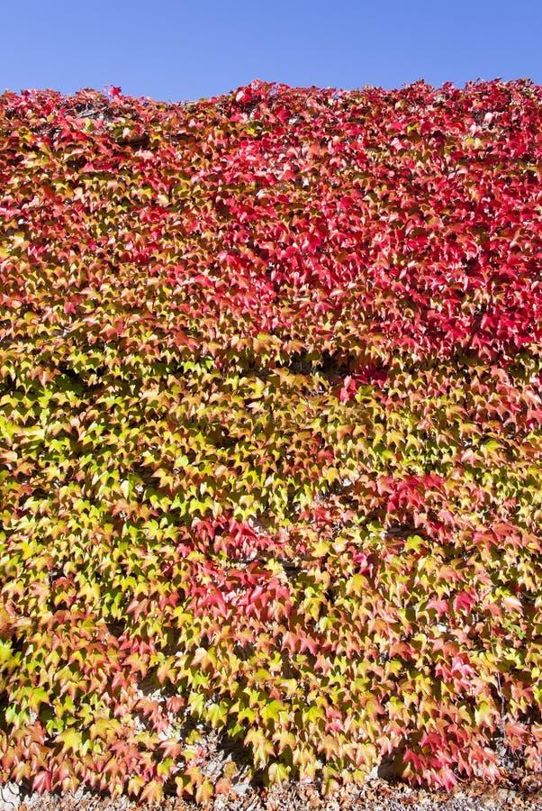 Jesień kolory obraz royalty free