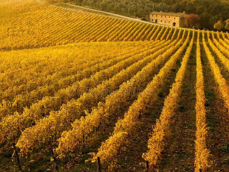 Jesień kolory Chianti winnicy między Siena i Florencja Włochy obrazy royalty free