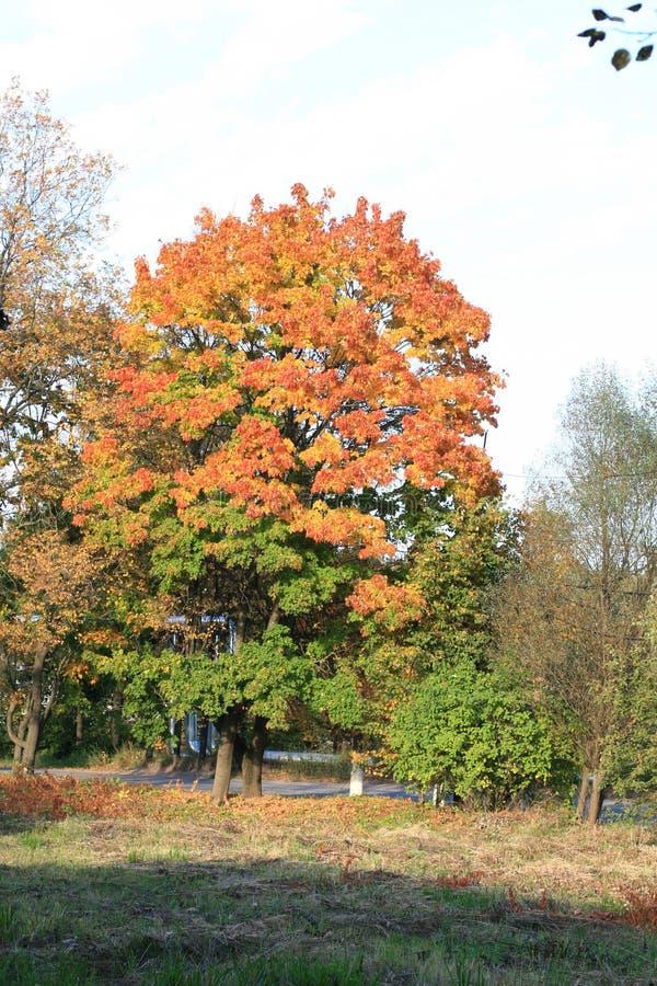 Jesień kolory Drzewa w spadku Żółty ulistnienie Piękno jesień zdjęcie royalty free
