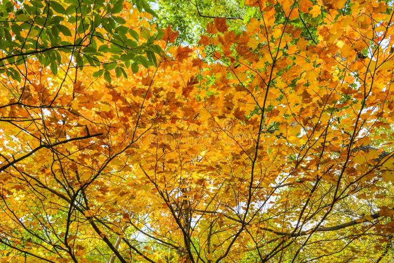 Jesień kolory na liściach zdjęcie royalty free