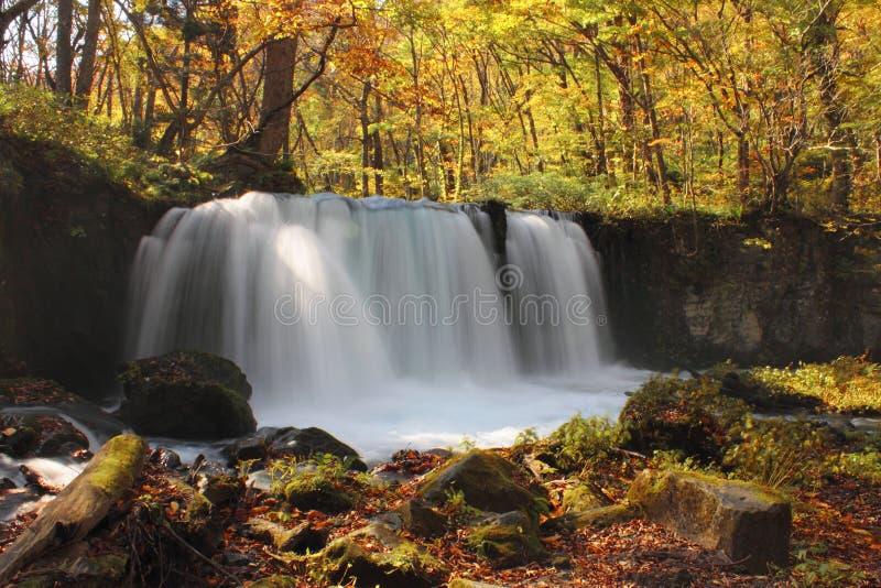 Jesień kolory Oirase rzeka zdjęcie stock