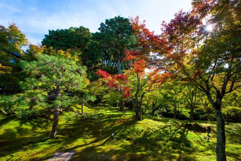 Jesień kolory przy tofukuji świątynią, Kyoto obrazy stock