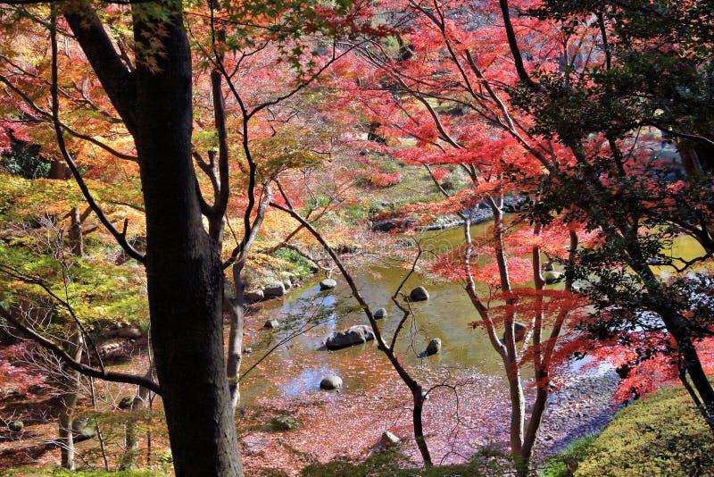 Jesień kolory Tokio obrazy royalty free