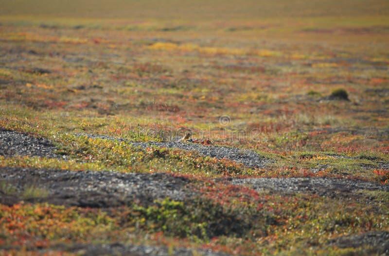 Jesień kolory tundra obraz stock