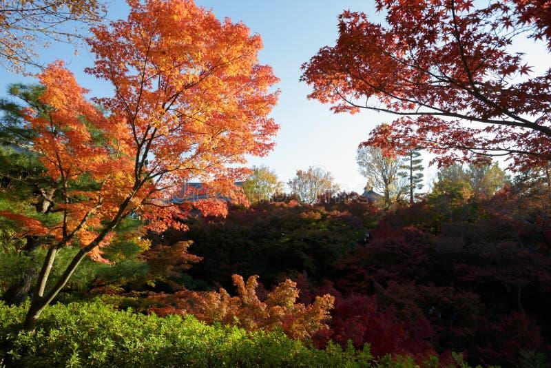 Jesień kolory w tofukuji świątyni, Kyoto fotografia stock