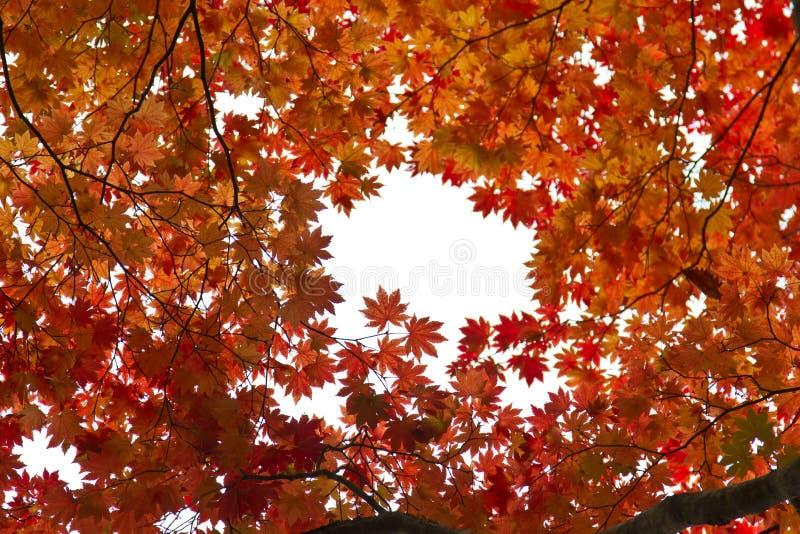 Jesień kolory w Tokyo obrazy stock